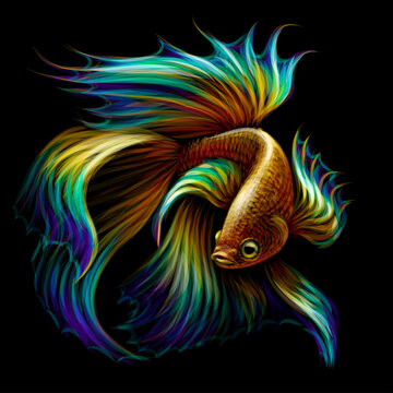 Tropical fish. Color graphic portrait of a fighting fish on a black background. Digital vector graphics.