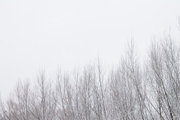 Fototapeta Snow covered tree branches. Winter landscape with free place