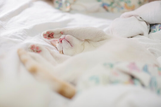 Blissful cat enjoys a nap on unmade bed