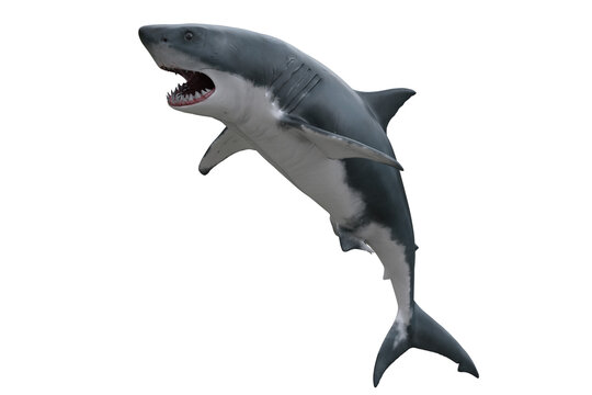 Great White Shark jumping. 3D render isolated on white.