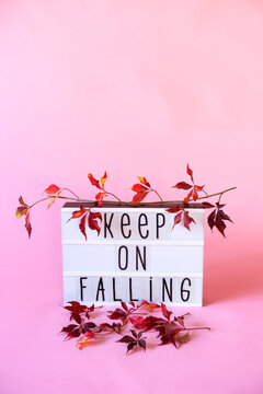 """lightbox with """"""""keep on falling"""""""" text surrounded by vine branch and fallen red leaves"""