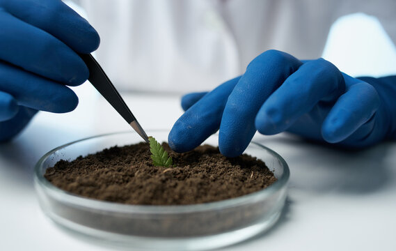 woman with plant in soil research laboratory gloves doctor