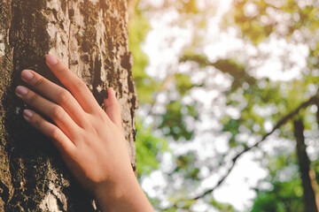 Cropped Hand Of Woman Touching Tree Trunk