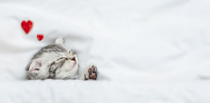 Dreaming kitten sleeps on a bed under warm white blanket. Valentines day concept. Top down view. Empty space for text