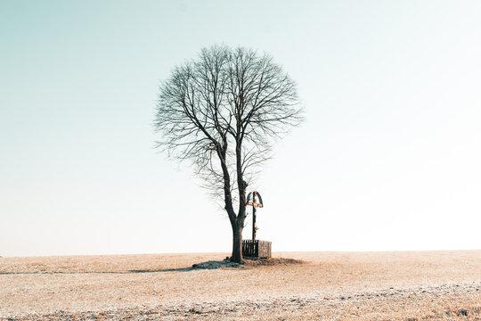 Single tree on a field