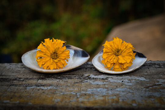 There is Tow Yellow-Green marigold flowers placed on top of a sea oyster, Also a Wood with black, yellow and white stains can be seen clearly