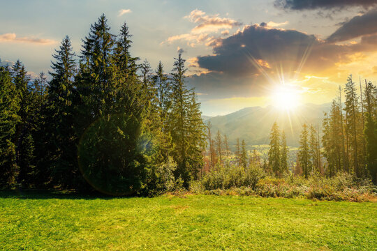 rural landscape in tatra mountains at sunset. spruce trees on the green grassy meadow of gubalowka range. beautiful nature scenery in evening light. clouds above the distant ridge