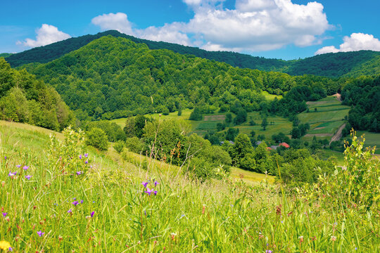rural landscape of ukrainian carpathians. beautiful summer scenery in mountains. green grassy meadow by the forest on the hill. mountain peak beneath a sky with fluffy clouds on a sunny day
