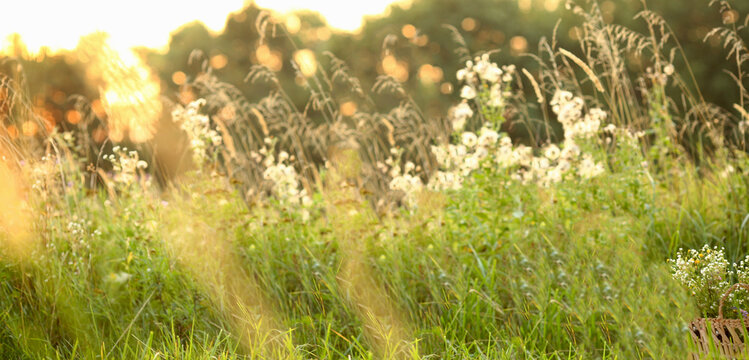 Banner with summer nature background on a sunny day, green grass and sunny boke with blur