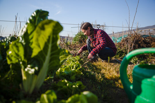 Young woman gardening in urban garden, concept sustainability and authentic lifestyle