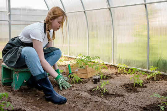 Agriculture, gardening. Girl gen z planted tomato seedlings in a greenhouse. Hobbies, remote work in quarantine in a virus. Slow life, digitally detox. Agriculture background