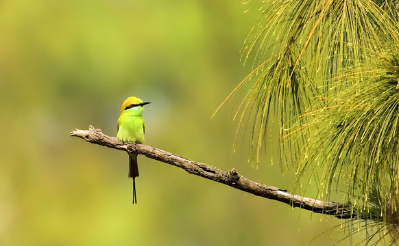 Closeup shot of a flying bee-eater bird perched on a branch on a blurred background