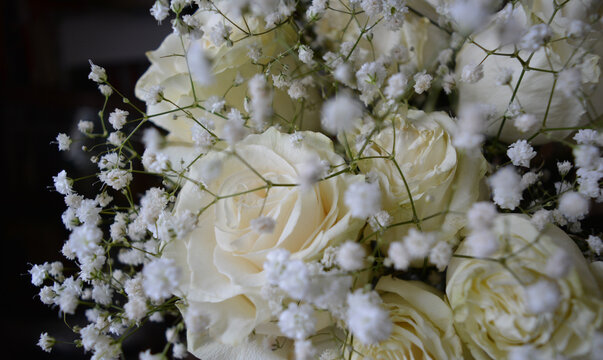 White roses and gypsophila on a black background. Beautiful floral arrangement.