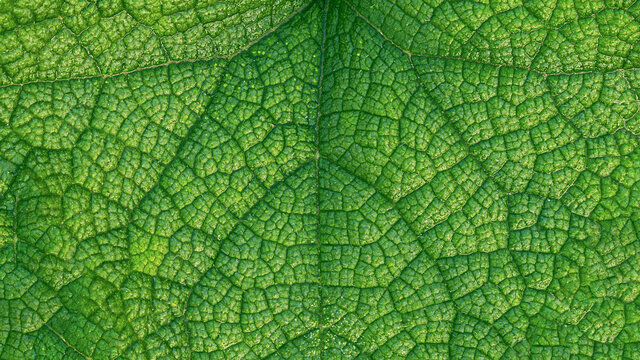 Close-up of a leaf textured background, beautiful nature texture concept