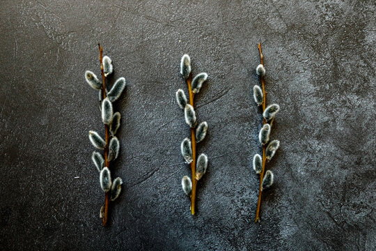 Happy Easter concept. Preparation for holiday. Pussy willow flowers branches on trendy grunge scratched dark black stone shale background. Simple minimalism flat lay top view, copy space