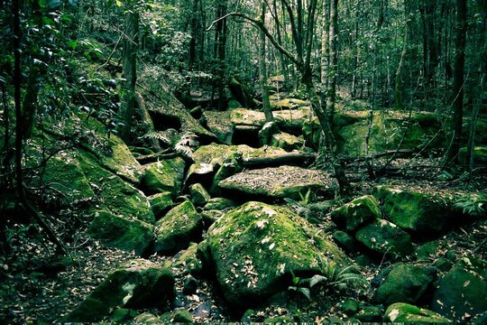 Large Rocks In Forest