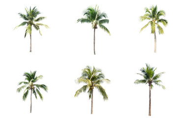 Palm tree or Coconut tree ,a green leaf isolation for summer background ,relax and vacation holiday...