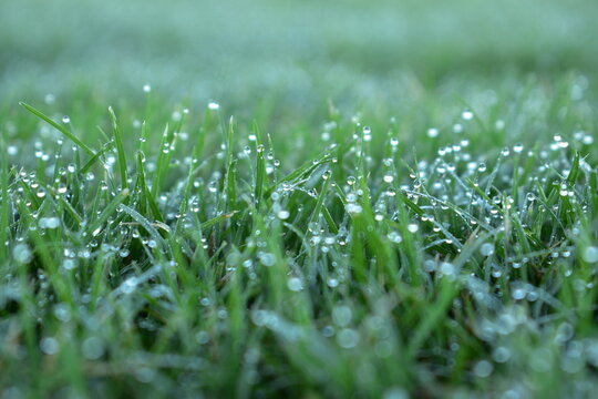 close up of dew on short mowed grass in large sports ground