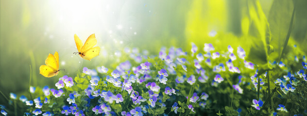 Small wild purple flowers in grass and two yellow butterflies soaring in nature in rays of sunlight close-up. Spring summer natural landscape.