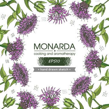 Background filled with Monarda , Bergamot. Detailed hand-drawn sketches, vector botanical illustration.