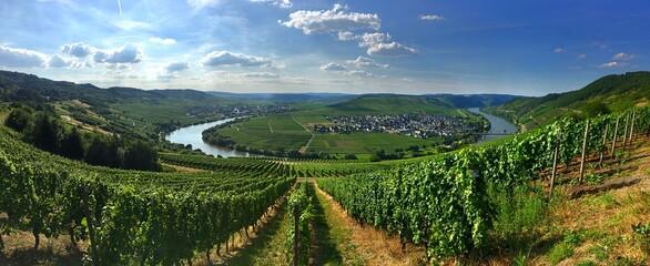 Panoramic View Of Vineyard Against Sky - fototapety na wymiar