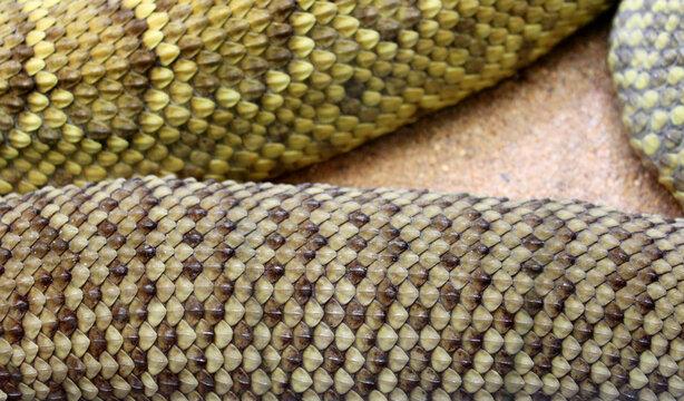 Snake Skin close up