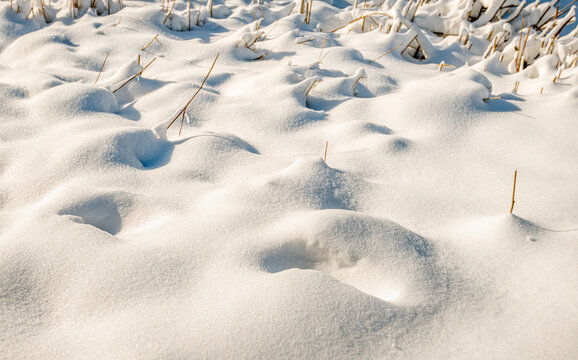 Close-up of pristine snow after a snowdrift with powder snow. Yellowed reed and grass stems stick out here and there above the snow. The photo was taken on a sunny winter day in the Netherlands.