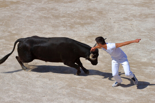 Couse camarguaise, un sport avec taureaux et hommes