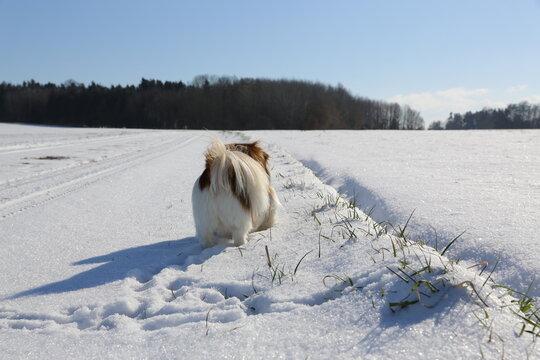 Kleiner Hund beim Winterspaziergang - Wandern, Schnee, Winter, Wanderung, Spaziergang