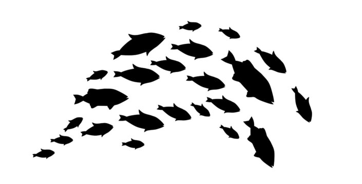 Silhouettes of groups of  fishes on white. Vector