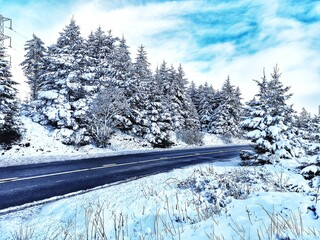 Obraz Snow Covered Pine Trees In Forest Against Sky - fototapety do salonu