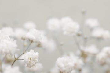 Soft focus. White flower on blur beige background.