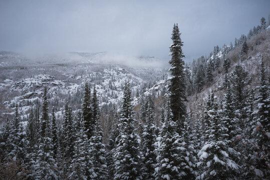 Fish Creek Falls Trail, Steamboat Springs, Colorado in winter