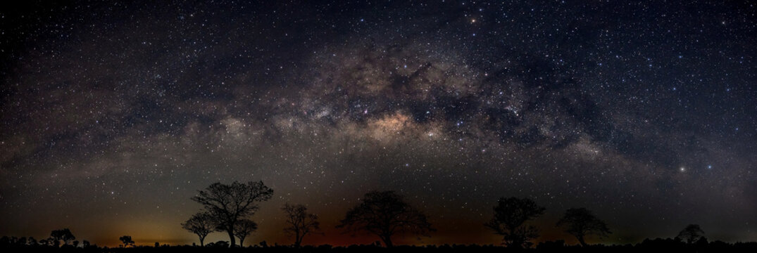 Panorama silhouette tree in africa with stars.Typical african dark night with acacia trees in Masai Mara, Kenya.Space background with noise and grain.