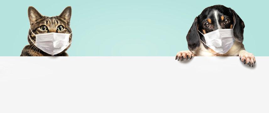 マスクをしている犬と猫。掲げた白いメッセージボード。