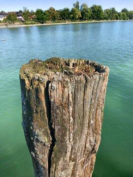 Close-up Of Tree Stump In Lake