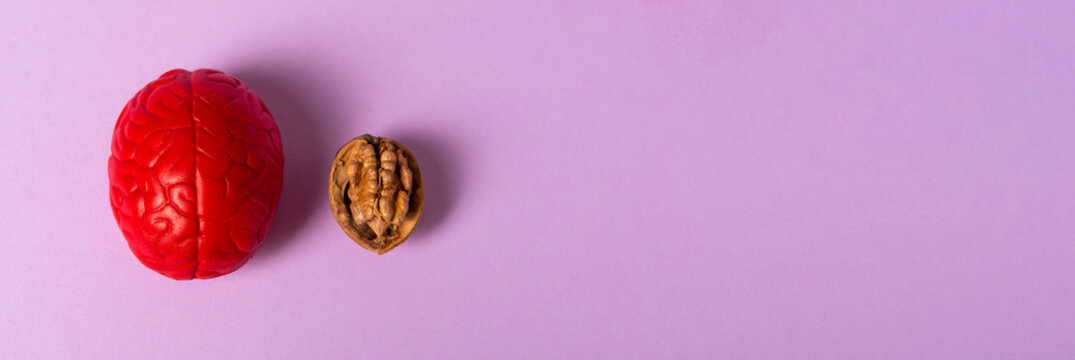 Walnut and red brain. The human brain is shaped like a walnut kernel. It symbolizes the brain's similarity to walnuts and its proven effectiveness as a nutrient