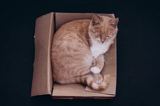 beautiful ginger cat sleeping in a cardboard box, top view