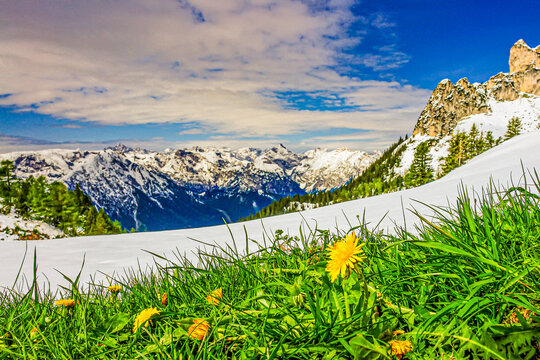Blick über dem Achensee in Österreich mit Wiese und Butterblume im Vordergrund