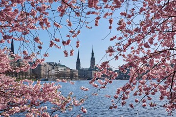 View Of Cherry Blossom With Buildings In Background