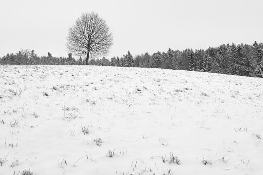 lonely single tree in winter on a snow covered hill in black and white color