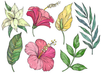 Set of tropical leaves. Tropical flowers and plants