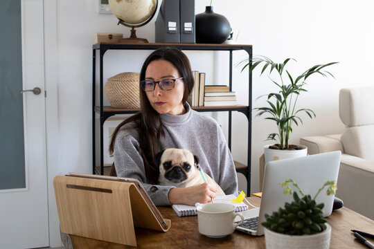 Woman working from home with her puppy. Home office work. Portrait of a girl working at home with her laptop, notebook, mobile phone and the pug puppy. Working with pets