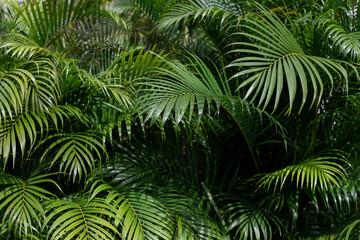 Obraz Full Frame Shot Of Palm Trees - fototapety do salonu