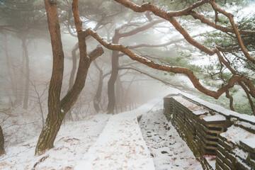 Fototapeta 남한산성 설경