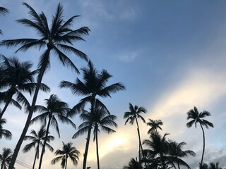 Low Angle View Of Palm Trees Against Sky Wall mural