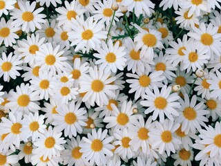 Obraz Full Frame Shot Of Yellow Flowers - fototapety do salonu
