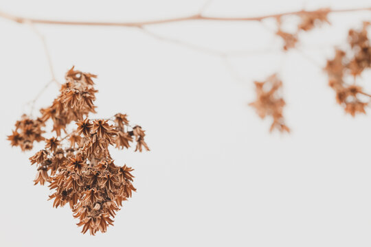 Bell shape tiny dry flowers with branch and light bokeh background macro
