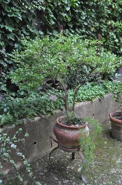 lush vegetation with plants