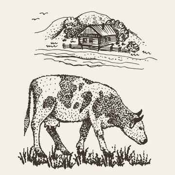 Drawing of a cow in the village